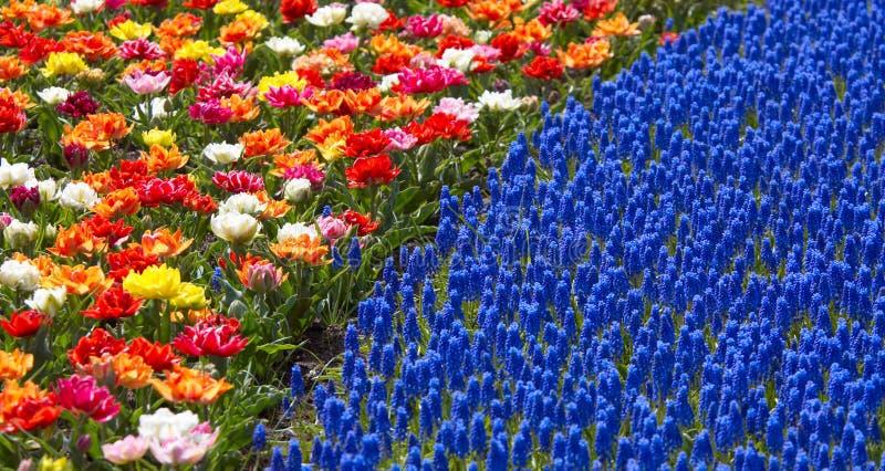 Kleuren van de lente royalty-vrije stock afbeelding