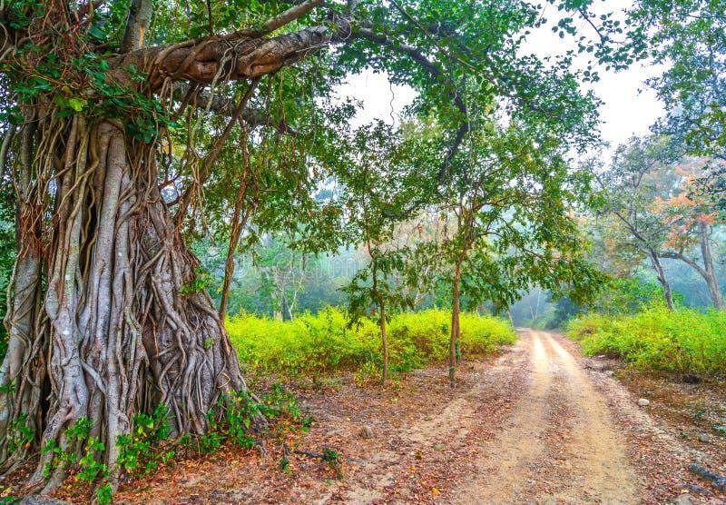 Kleuren van het bos royalty-vrije stock afbeeldingen