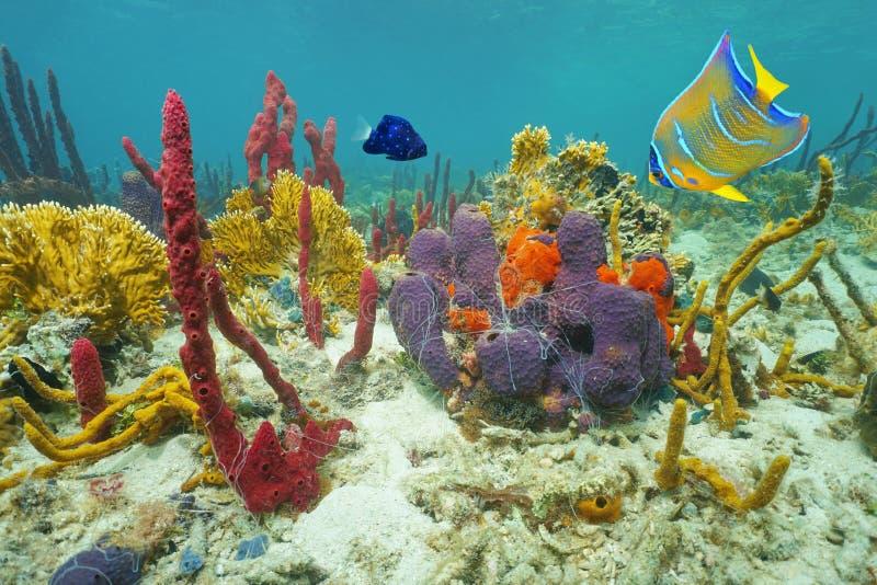 Kleuren van het onderwater mariene leven op de zeebedding stock afbeeldingen