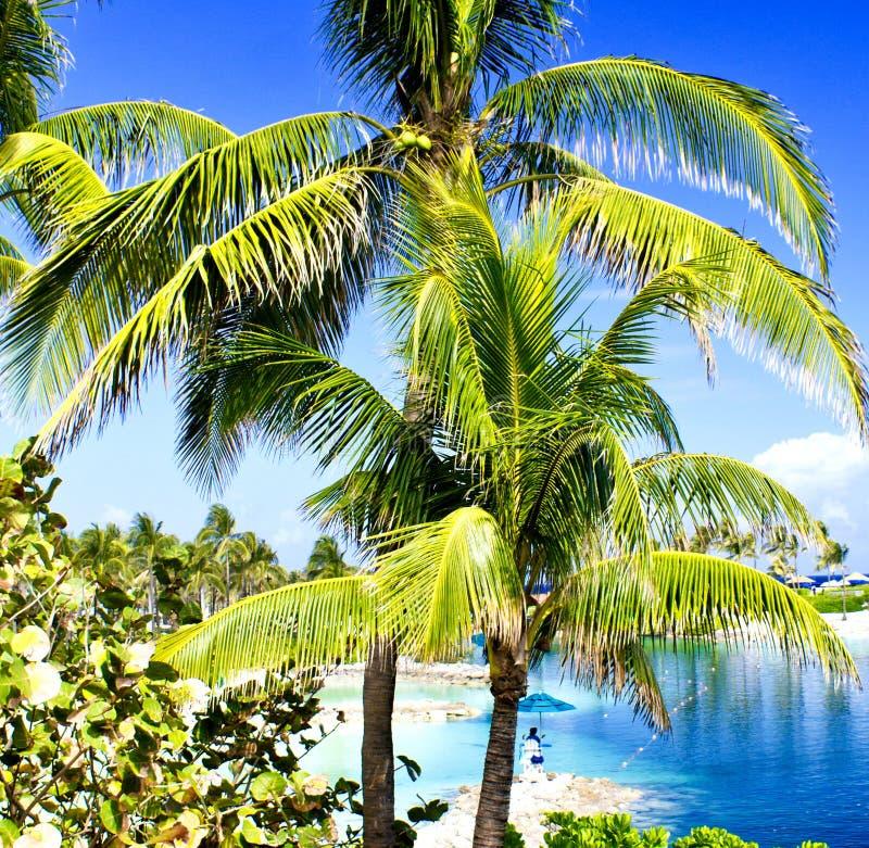 Kleuren van Nassau, de Bahamas stock afbeeldingen