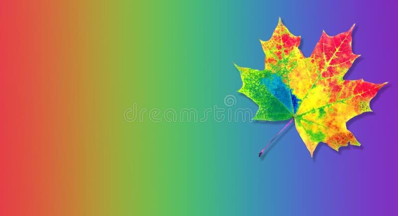 Kleuren van regenboog kleurenconcept in aard het heldere kleurrijke blad van de de herfstesdoorn Exemplaarruimten stock foto's