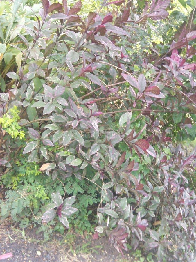 kleurenboom stock fotografie