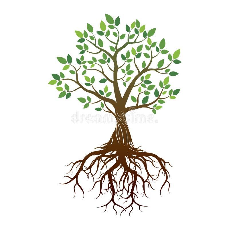 Kleurenboom en Wortels Vector illustratie royalty-vrije illustratie