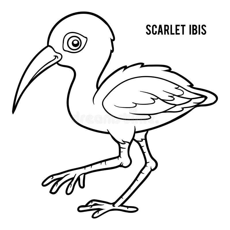 Kleurend boek, Scharlaken ibis vector illustratie