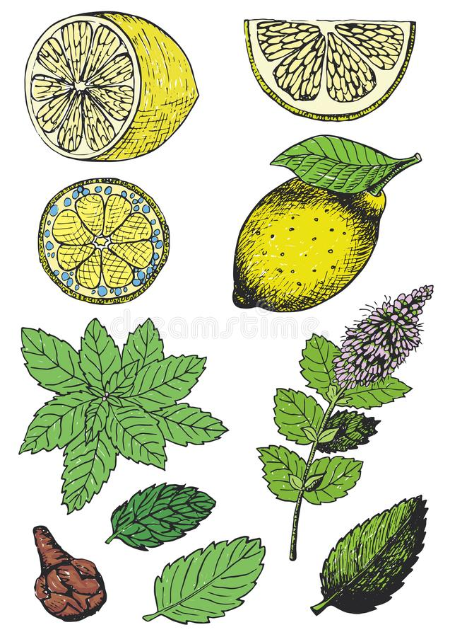 Kleurenillustratie van verschillende ingrediënten voor thee het drinken vector illustratie