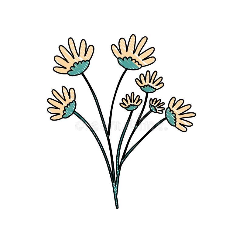 Kleurpotloodsilhouet van hand die geel de bloemboeket van het kleurenmadeliefje met verscheidene vertakkingen trekken vector illustratie