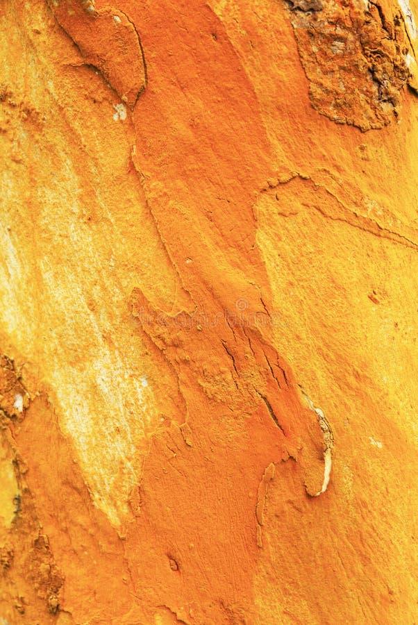 Kleurrijk abstract patroon van de oude schors van de eucalyptusboom in natuurlijk, fantastisch van mos en korstmos veelkleurige g stock afbeeldingen