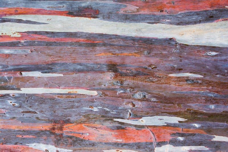 Kleurrijk abstract patroon van de schors van de Eucalyptusboom Kleurrijke de schorsachtergrond van de eucalyptusboom stock afbeelding