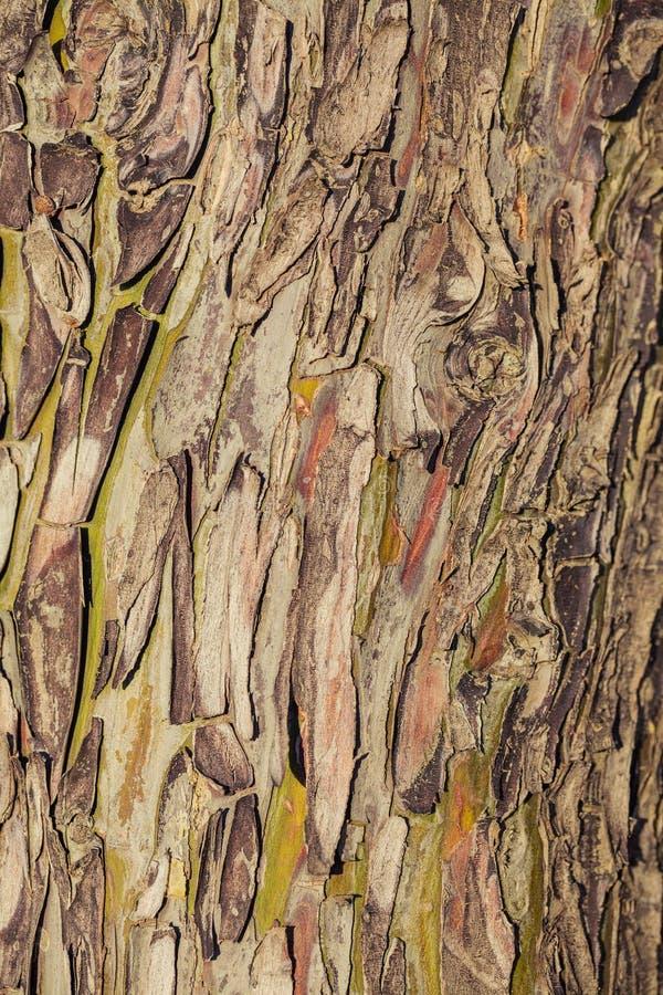 Kleurrijk abstract patroon van de schors van de Eucalyptusboom stock foto's