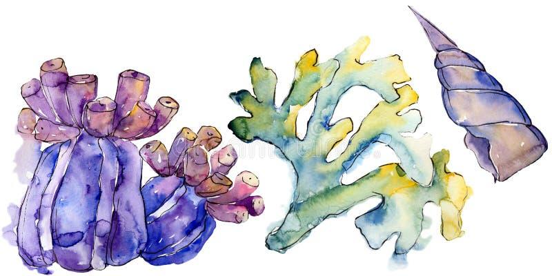Kleurrijk aquatisch onderwateraardkoraalrif Geïsoleerd illustratieelement royalty-vrije illustratie