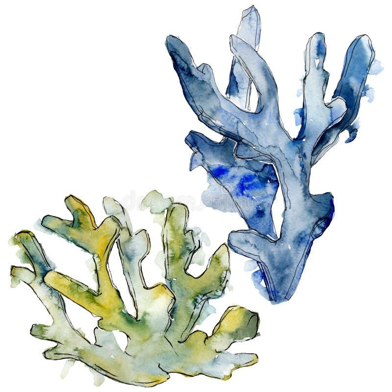 Kleurrijk aquatisch onderwateraardkoraalrif Van de achtergrond waterverf reeks Het geïsoleerde element van de koralenillustratie royalty-vrije illustratie