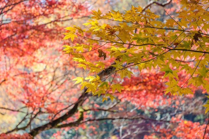 Kleurrijk Autumn Leaf Season stock fotografie