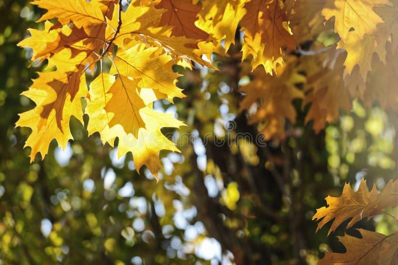 Kleurrijk Autumn Leaves stock fotografie