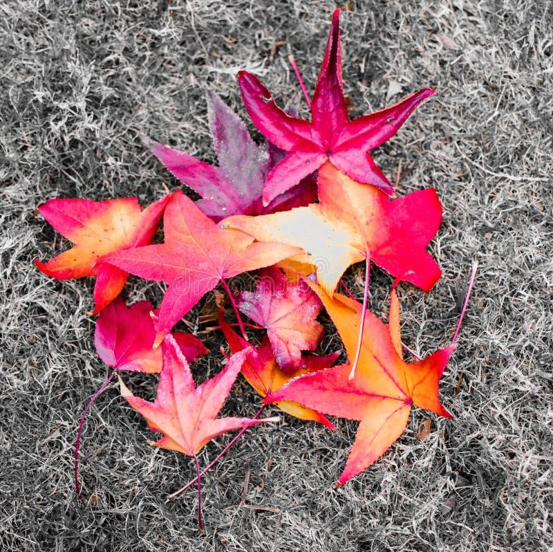 Kleurrijk Autumn Leaves op Grond bij een Park stock foto