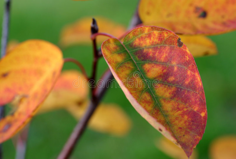 Kleurrijk blad stock foto's