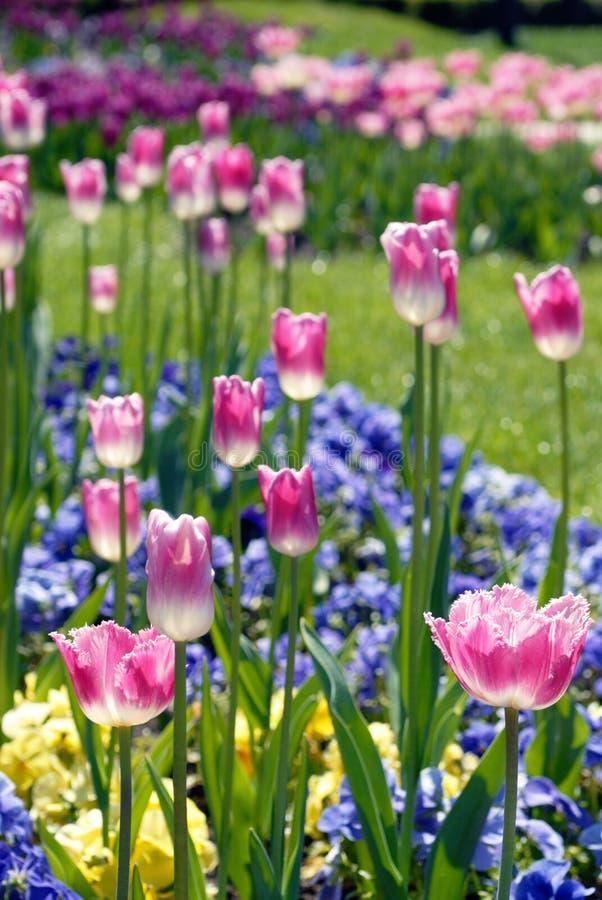 Kleurrijk bloembed royalty-vrije stock afbeelding