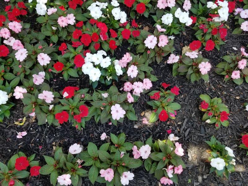 Kleurrijk bloembed stock afbeelding