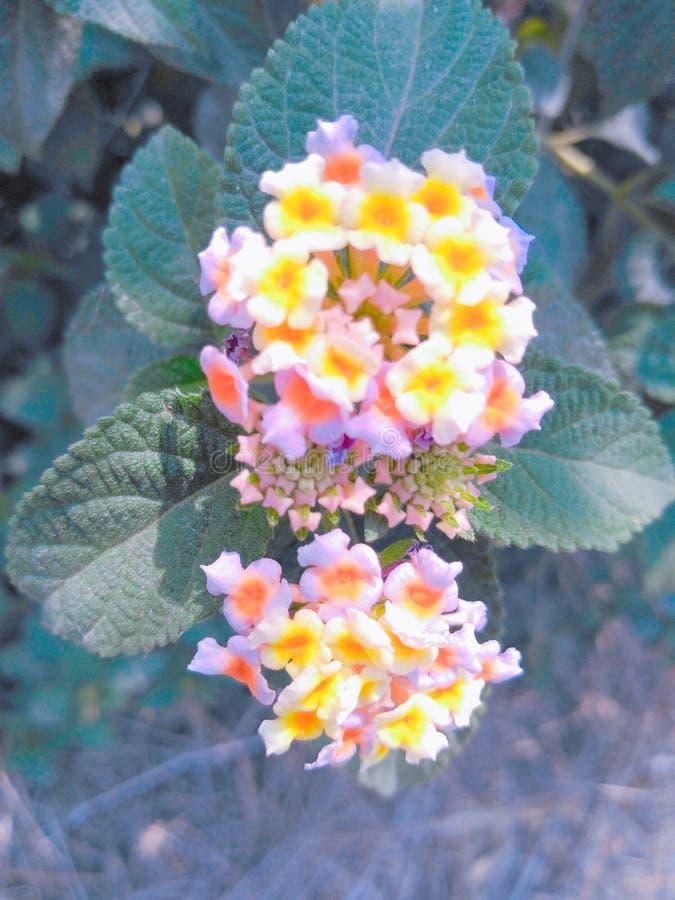Kleurrijk bloemenbeeld royalty-vrije stock afbeeldingen