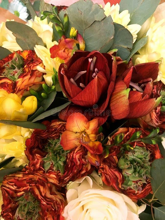 Kleurrijk bloemenboeket Samenstelling met Kleurrijk Bloemen Rode Amaryllis en oranje nam toe Close-up mooi boeket stock afbeeldingen
