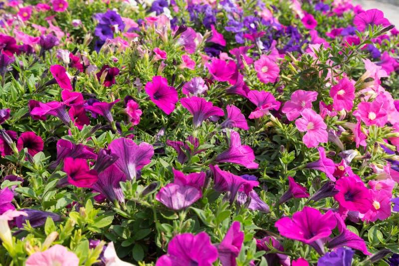 Kleurrijk bloemgebied stock foto's