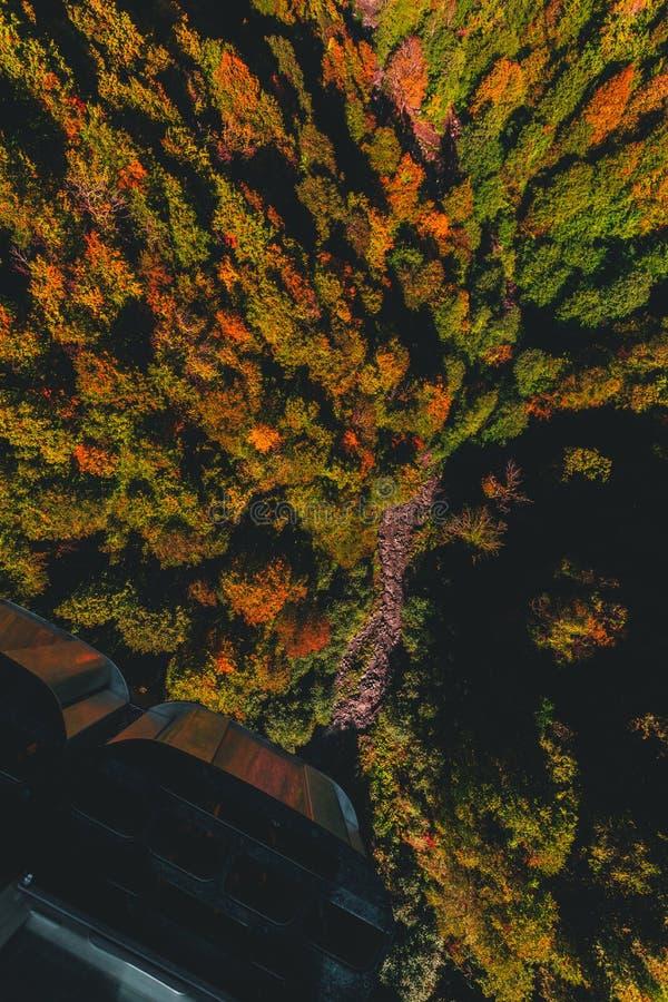 Kleurrijk bos in de herfst van helikopter stock afbeeldingen