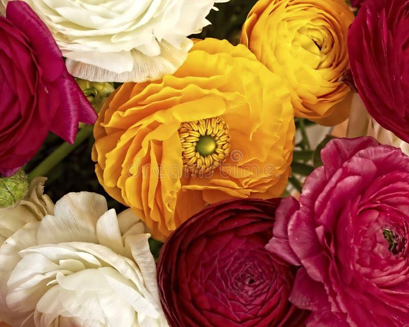 Kleurrijk boterbloemenboeket stock foto's