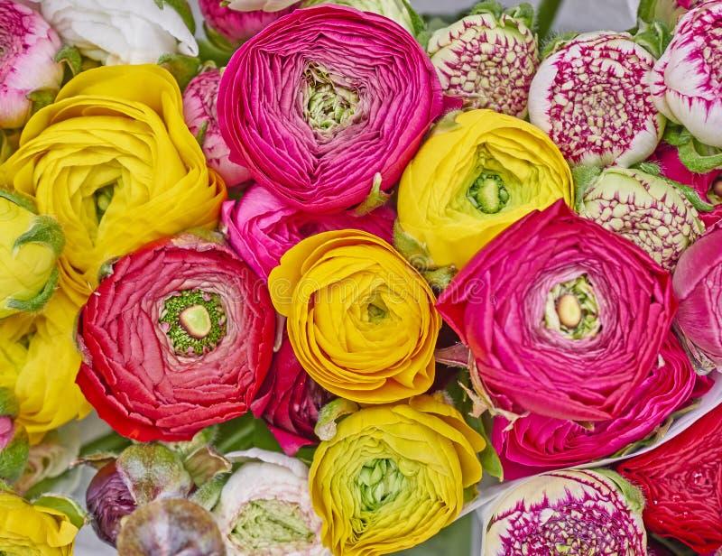 Kleurrijk boterbloemenclose-up royalty-vrije stock afbeelding