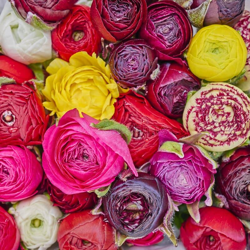 Kleurrijk boterbloemenclose-up royalty-vrije stock foto's