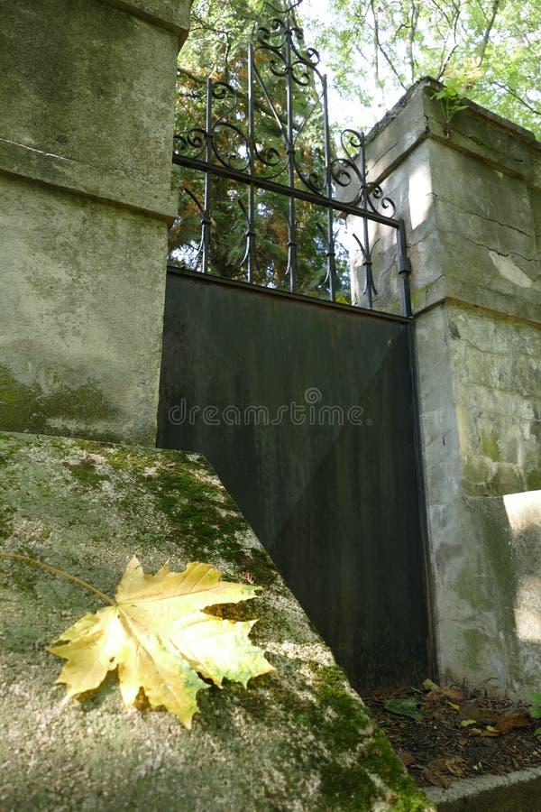 Kleurrijk de herfstblad op een oude begraafplaatsmuur stock foto's