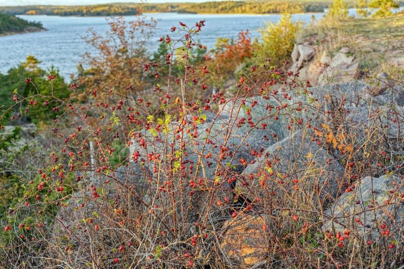 Kleurrijk de herfstbos royalty-vrije stock foto