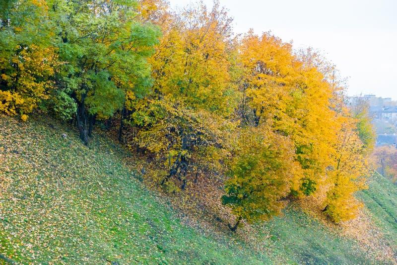 Kleurrijk de herfstbos in daling van de Ozark Mountain-wildernis van Arkansas De bomen komen levend met kleur als seizoenen en royalty-vrije stock afbeelding
