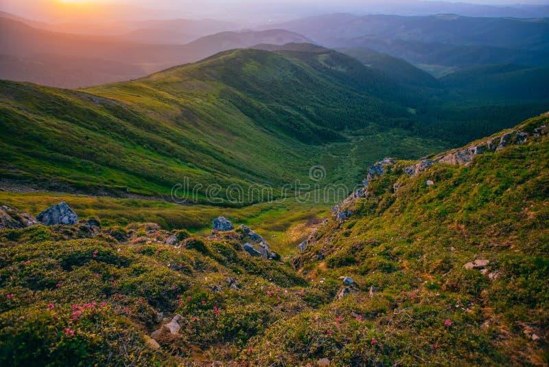 Kleurrijk de zomerlandschap in de Karpatische bergen stock fotografie