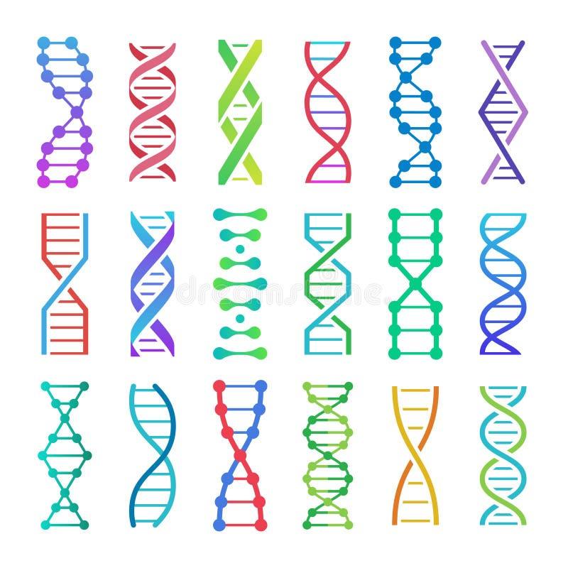Kleurrijk DNA-pictogram ADN-coderen het structuur spiraalvormige, deoxyribonucleic zure medische onderzoek en de menskundegenetic stock illustratie