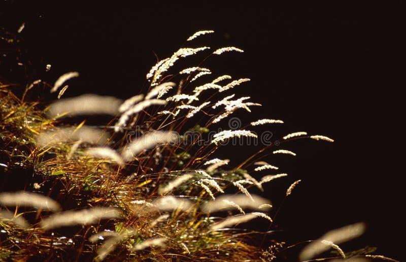 Kleurrijk droog gras stock foto's