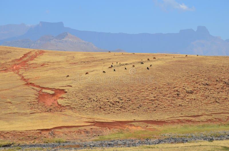 Kleurrijk erosieland royalty-vrije stock fotografie