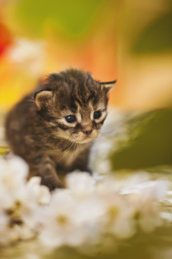Kleurrijk gestemd beeld van weinig grijs gestreept katje op veelkleurig royalty-vrije stock foto