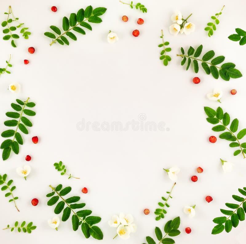 Kleurrijk helder patroon van bladeren, bessen en bloemen stock foto's