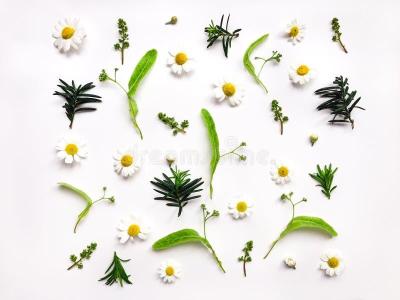 Kleurrijk helder patroon van weidekruiden en bloemen op witte achtergrond Vlak leg foto royalty-vrije stock foto's