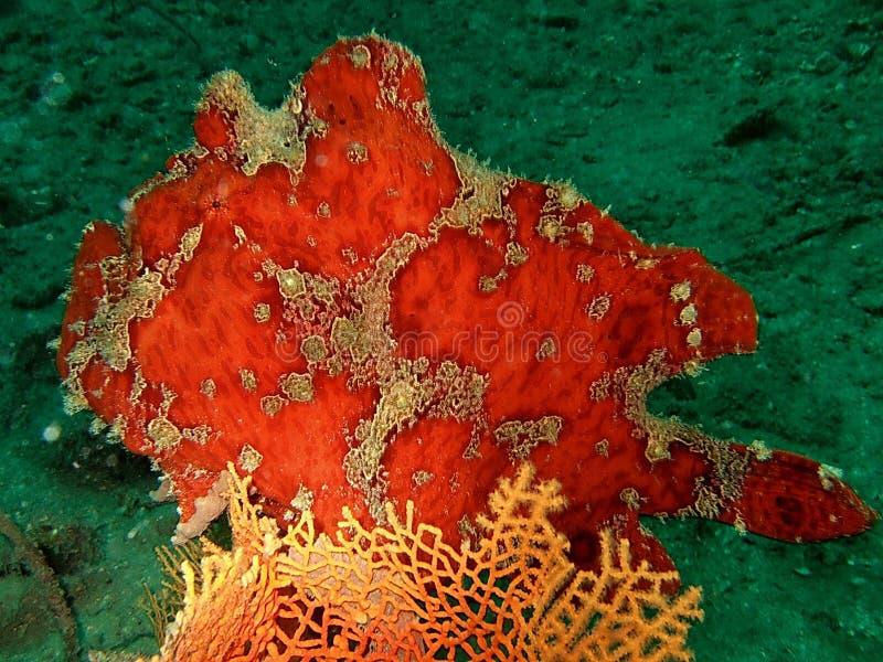 Kleurrijk koraalrif royalty-vrije stock afbeeldingen