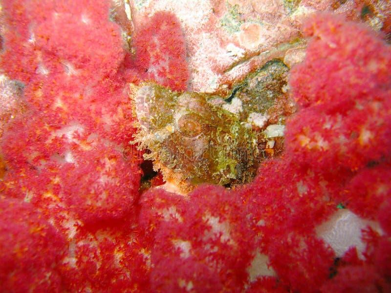 Kleurrijk koraalrif stock afbeelding