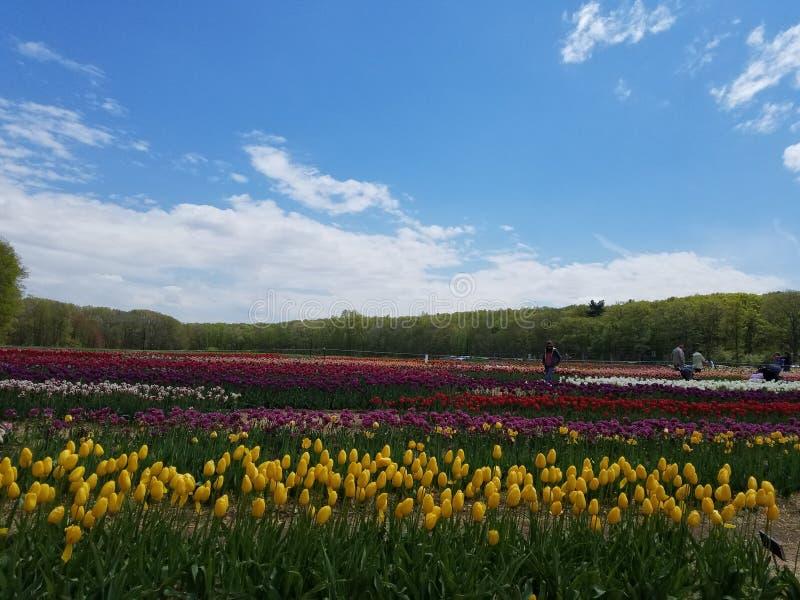 Kleurrijk land stock foto