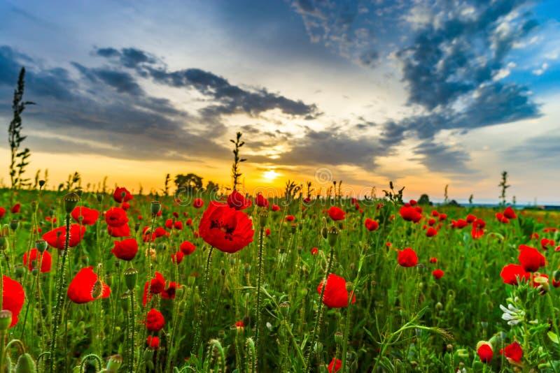 Kleurrijk landschap bij zonsopgang: zon, rode papavers en blauwe hemel stock afbeelding