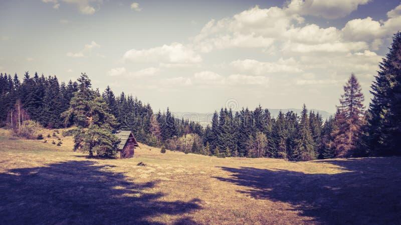 Kleurrijk landschap van bergweide royalty-vrije stock afbeelding