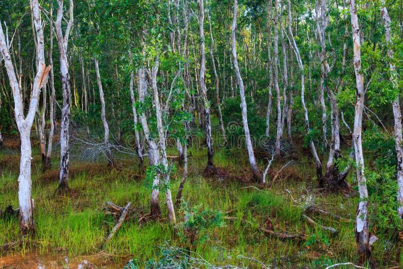 Kleurrijk landschap van groen moerasbos met wortel Mooi Na royalty-vrije stock foto