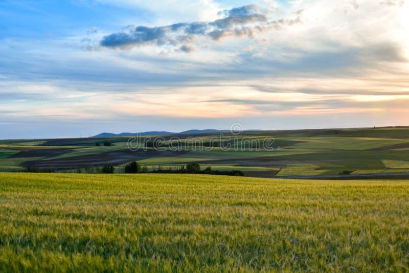 Kleurrijk landschap van zonsondergang in landbouwgrond Vrijheidssensatie stock fotografie