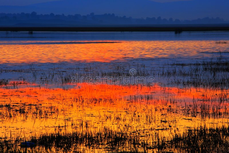 Kleurrijk moeras stock afbeelding