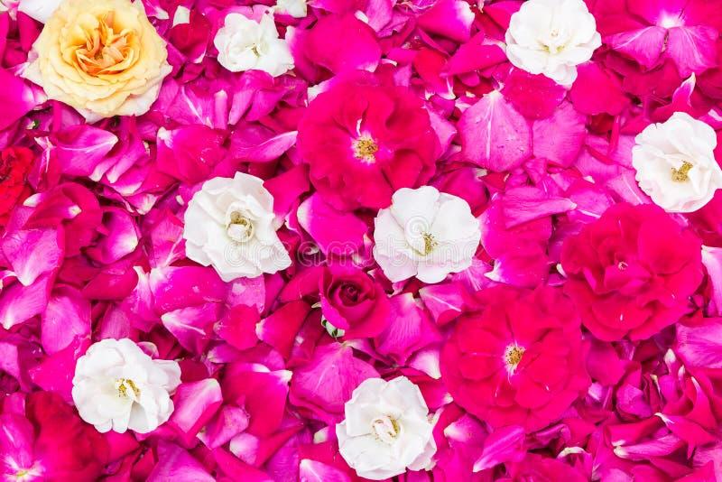 Kleurrijk nam bloemblaadjesachtergrond toe royalty-vrije stock afbeeldingen