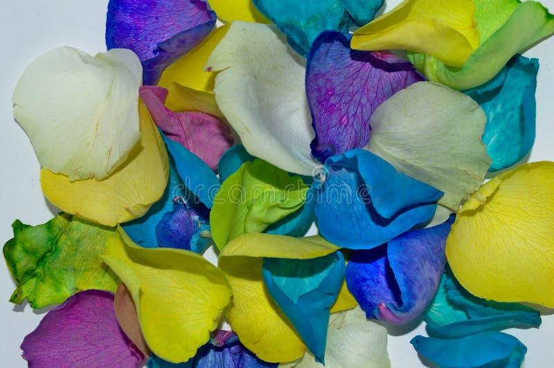 Kleurrijk nam bloemblaadjesachtergrond toe stock fotografie