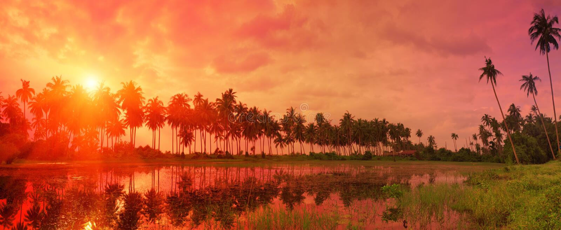 Kleurrijk tropisch landschap met schemeringhemel en palmen ref stock afbeelding