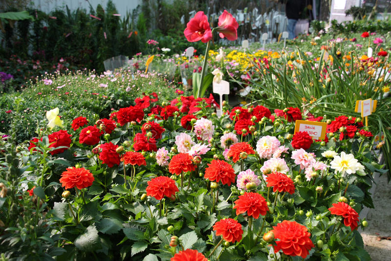 Kleurrijk tuincentrum stock foto